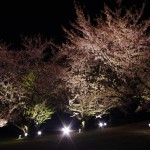 夜桜二重奏は単気筒とマルチの調べ