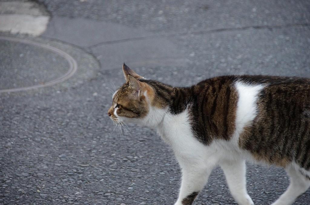 PENTAX K-5 iis SIGMA 18-250 猫