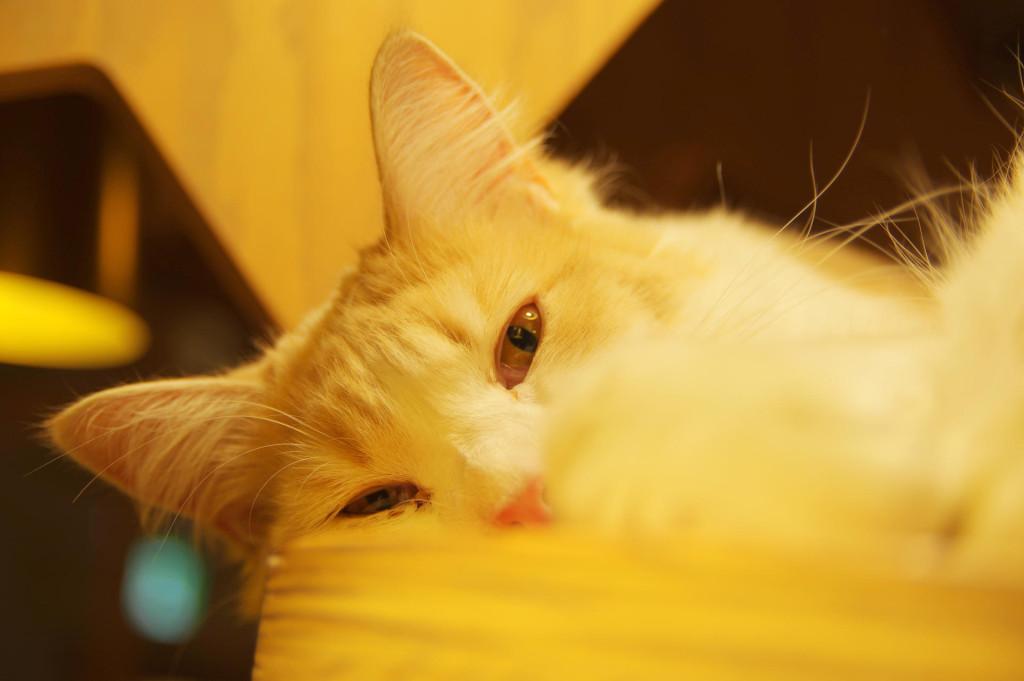 池袋 猫カフェ 写真